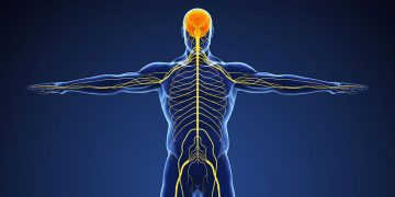 Peripheral Neurology