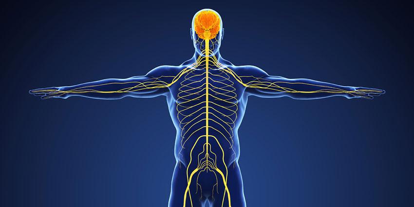 peripheral-Neurology850x425