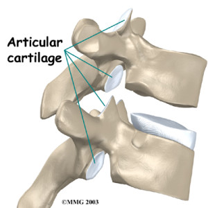 thoracic_facet_joint